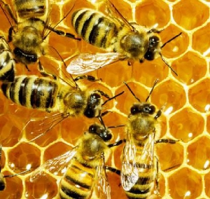 جدا سازی موم و بستهبندی عسل در خانه